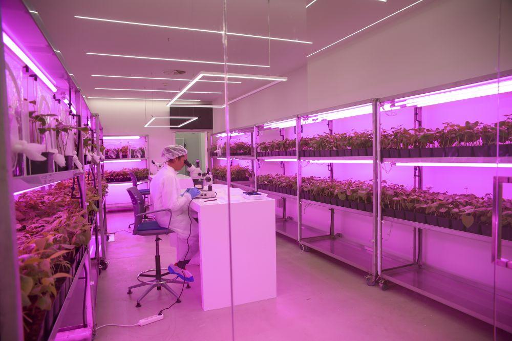 innovatív kutatás a Kimitec gyárban